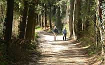 Hikers walking in an old forest