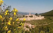 Old castle in the distance, yellow flowers in the focus