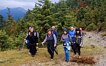 Group of hikers walking on a trail along pine trees during their walking holiday in Greece