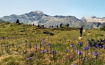 Group on a guided walk through the French Pyrenees