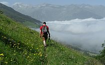 Walker on a trail in the Pyrenees, among wild flowers, low clours underneath