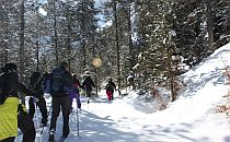 People snowshoeing on a trail in a forest