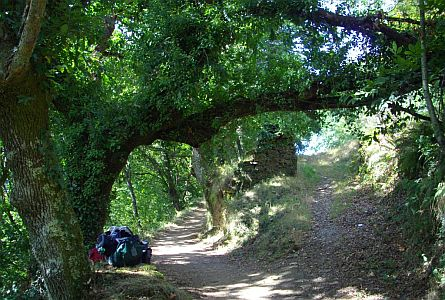 A shaded path in green woodland