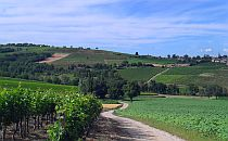 View on rolling hills and vineyards of the tarn region