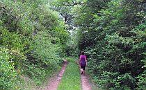 walker enjoying a woodland walk in France