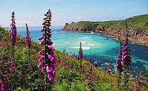 Flowery cliffs and grassland along the Cornwall coast