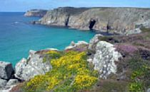 Cliffs carpeted in wildflowers in spring and early summer, ideal time for a Cornwall walking holiday