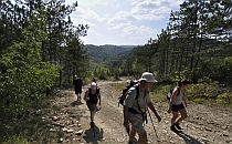 People walking on a path through forest