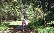 Person walking along a forest path