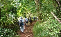 walking holiday party walking along woodland trail