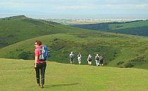 group of walkers walking through pastures