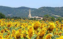 church seen over a field of sunflowers