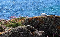 Wild flowers growing on rocks,  beautiful blue waters in the backgound