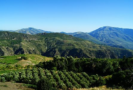 Rural landscape in Andalucia with mountains in the background.
