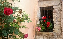 Red flowers on a window sill