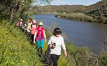 People walking along a river and yellow flowers