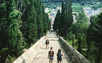 People walking down long stairs, tall trees on the side