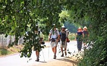 Group of walkers appearing from behind an overhanging tree