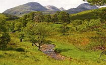 Trees along a stream, great hills in the background