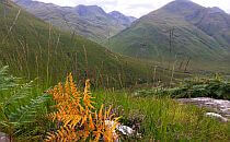 Wild plants with great mountains in the background