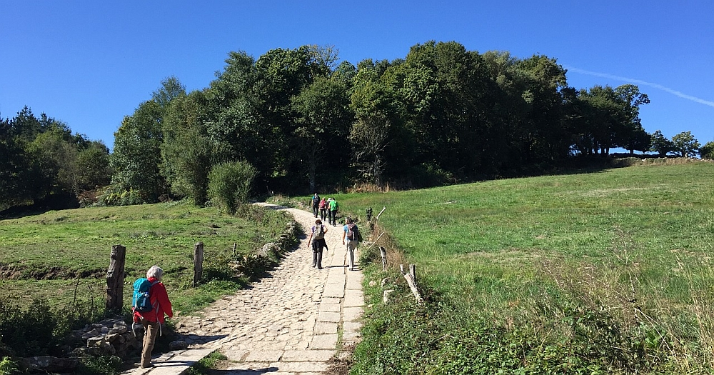 People walking on a trail towards a forest