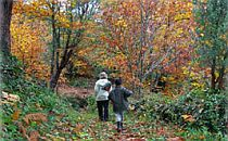 Two people walking through pretty autumn forest in Spain