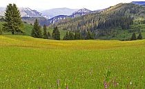 Meadow in Rhodope mountains