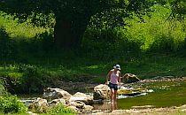 Walker crossing a stream