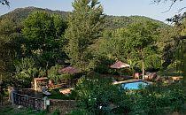 Swimmingpool hidden among big trees