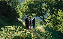 People walking on a trail with green vegetation all around