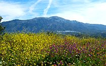 Wildflower meadow in Andalucia in Spain