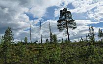 Beautiful landscape in Fulufjellet National Park