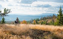 Man riding a horse on a hill in Norway, beautiful forests in the background