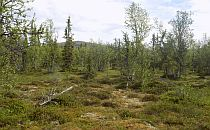 Beautiful green open space in the Fulufjellet National Park