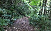 woodland walk path