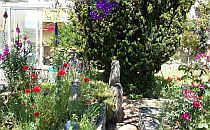 A garden path surrownded with flowers