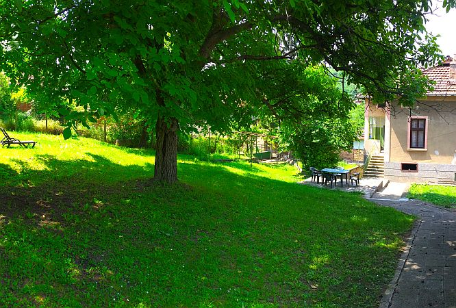 Green meadow with a huge walnut tree in the middle, little house at the bacj