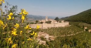 Old Italian castle visible behind a curtain of yellow flowers