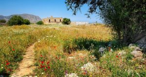 small walking path through a dry flower meadow on Crete