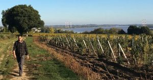 man walking past vineyards with the Gironde Estuary in the background