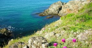 View towards a beautiful turquoise sea, few pink flowers nearby